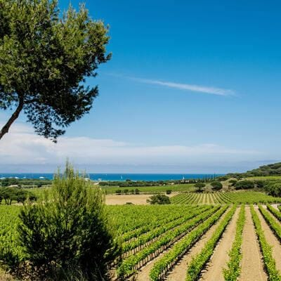 Ramatuelle (north-eastern France): surrounding area of Ramatuelle with the vineyards and, far off, the coast and the Pampelonne Bay (Photo by: Andia/Universal Images Group via Getty Images)